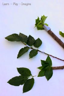How to make homemade paint brushes using leaves and sticks - art with nature!