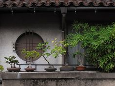 One plant per container. Garden Buildings, City Buildings, Japan Garden, Aesthetic Japan, Garden Pots, Potted Garden, Model Homes, Wabi Sabi, Potted Plants