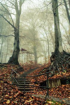 Forest Sentinels, Bavaria, Germany