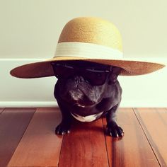 28defb1dd072b Instagram s Hipster French Bulldog Puts On A Pair Of Shutter Shades