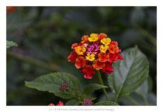 Serralves [2013 - Porto / Oporto - Portugal] #fotografias #flor #flores #flower #flowers