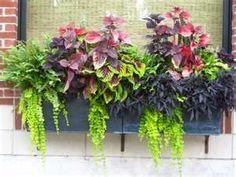 window box foliage mix