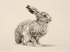 leveret black and white photo