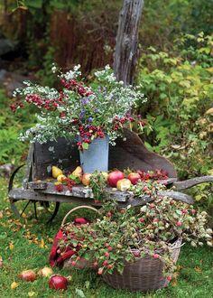 L'aria più frizzantina, le ombre lunghe sul prato, il sole che tramonta sempre più presto... L'autunno è già arrivato e tra pocoregalerà l'incanto della natura infuocata che in questa stagione si colora di giallo, di rosso, di arancioedi viola, offrendo scenaridi straordinaria bel