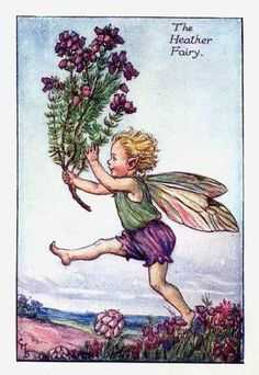 """Vintage print 'The Heather Fairy' by Cicely Mary Barker from """"The Book of the Flower Fairies""""; Poem and Pictures by Cicely Mary Barker, Published by Blackie & Son Limited, London [Flower Fairies - Summer] Cicely Mary Barker, Flower Fairies, Heather Flower, Fairy Pictures, Vintage Fairies, Fantasy Illustration, Antique Illustration, Fairy Art, Illustrators"""