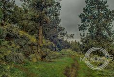 Al Moody Park in Bend, Oregon Oregon, Country Roads, Park, Places, Parks, Lugares