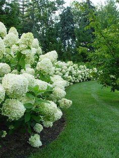 White & Hydrangeas