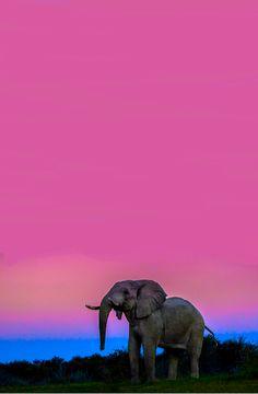 el atardecer de los elefantes