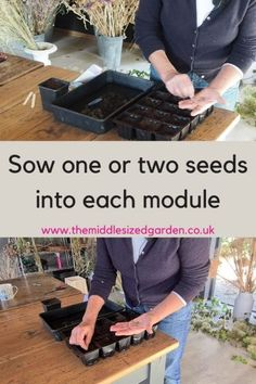 Seed sowing - step-by-step tips for better germination Growing Seeds, Seed Packets, Colorful Garden, Compost, Perennials, Colour, Tips, Flowers, Color