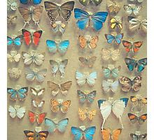 The Butterfly Collection II Photographic Print