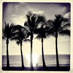 Five palms and the man who watches waves