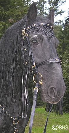 Hungarian Heritage Bridle (on a Friesian I think? gorgeous!)