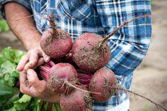 Fresh beets Fresh Beets, Vegetables, Vegetable Recipes, Veggie Food, Veggies