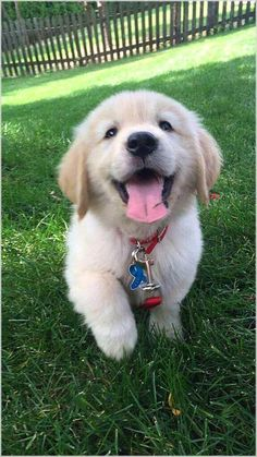 Cute dogs and puppies - Funny Dog Top Super Cute Puppies, Cute Baby Dogs, Cute Little Puppies, Cute Dogs And Puppies, Cute Little Animals, Cute Funny Animals, Funny Dogs, Cute Cats, Doggies