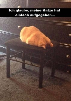 38 Funny Animal Memes Of The Day To Make You Impossible Not To Laugh - JustViral.Net Animal memes of the day. Here are top funny animal memes of the day to make you impossible to laugh. Funny Animal Jokes, Funny Cat Memes, Cute Funny Animals, Funny Animal Pictures, Cute Baby Animals, Funny Cute, Animals And Pets, Cute Cats, Funny Humor