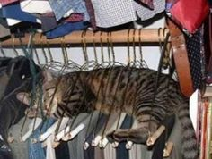 Katzen passen überall rein