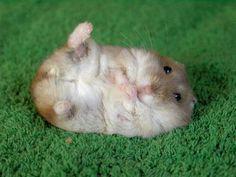 Ouwwhhh~~ cutie cutie cutie =3