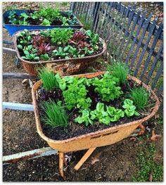 Wheelbarrow herb garden