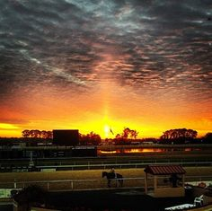 Tampa Bay Downs, from the Grandstand, as the sun comes up during morning training hours.