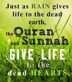 Quran and Sunnah