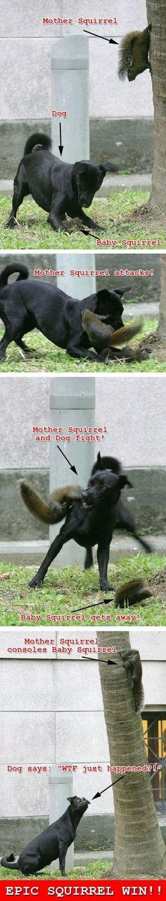 Epic Squirrel Win!