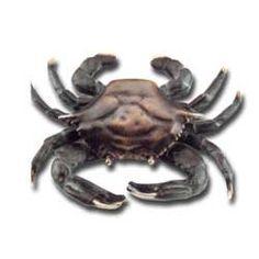 Solid Brass Crab Doorknocker Coastal Beach Marine Life 6 X