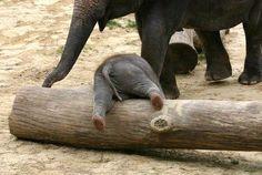 Apropos … wenn wir über Baby-Elefanten reden, müssen wir unbedingt auch über Baby-Elefantenpopos reden!