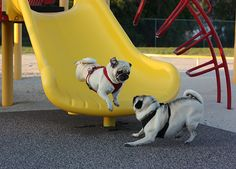 Benjamin going down the slide.  Henry getting ready to pounce.