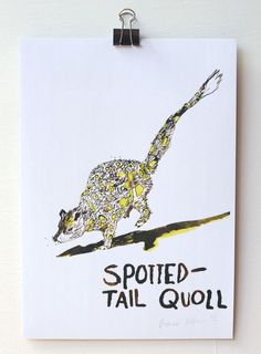 'Spotted Tail Quoll' is a beautiful reproduction of an ink and acrylic illustration by artist Diana Ellinger. This A4 print combines yellow and earthy tones and is hand signed by the artist. | huntingforgeorge.com
