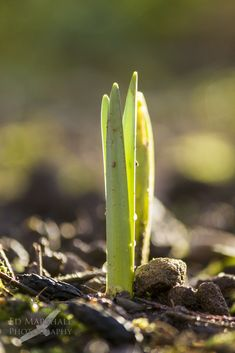 #RSPB Nature's Home Mag blog post - signs of spring. Hard to believe it's on it's way but the signs are out there if you look closely!