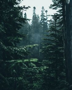 Dark Green Aesthetic, Nature Aesthetic, Aesthetic Colors, Aesthetic Pictures, Forest Photography, Landscape Photography, Nature Sauvage, Forest Wallpaper, Dark Green Wallpaper