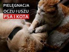 czyszczenie uszu psa i kota