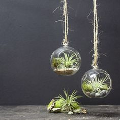 Mini Hanging Air Plant Terrarium, Set of 2