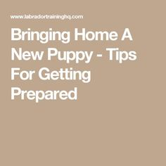 Bringing Home A New Puppy - Tips For Getting Prepared