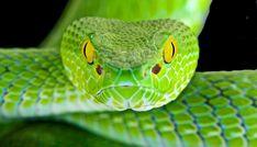 manfaat ular