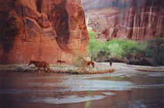 Canyon de Chelly, Arizona  by anna verlet shelton, via Flickr