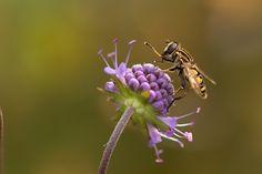 Ảnh miễn phí trên Pixabay - Moorabbis, Đầm Lầy, Đầm Lầy Nhà Máy