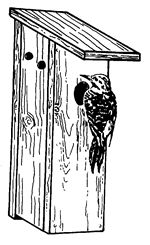 Easy Free Winter Bird House Plans To Provide A Winter Bird Roost Or Shelter During The Cold ...