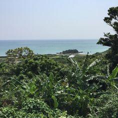 手前の葉がでかい植物がバナナです #バナナ #海 #沖縄 #日本 #banana #sea #okinawa #japan
