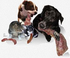Wisely-Selected RAW Bones Are An Alternative To Frequent Dental Visits For Dogs And Cats
