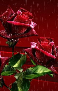 Beautiful red roses GIF ~♡`