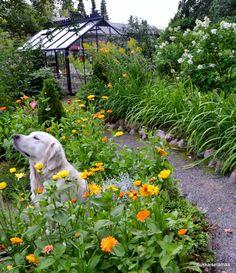 Pin by Svetlana Blaua on Сад Beautiful World, Beautiful Gardens, Life Goals Future, Cute Jokes, Future Farms, Make Smile, Natural Garden, Exotic Plants, House In The Woods