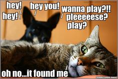 LOL... I feel Like this sometimes when I knock on my sisters door. (I'm not the cat... FYI )