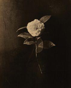 """: """" Masao Yamamoto A box of Ku (series), """"Japan Yamamoto, Aesthetic Art, Fine Art Photography, Flower Photography, Black And White Photography, Oeuvre D'art, Photo Art, Monochrome, Photographic Prints"""