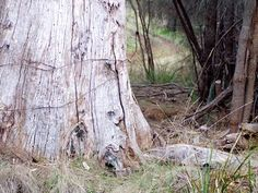 Tinderbox Hills Track, Hobart, Tasmania This is Australia Bike Trails, Hiking Trails, Gravel Path, Winding Road, Tasmania, Trail Running, East Coast, Habitats, Paths