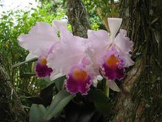 Orquideas Colombianas | Fotografía: Orquídeas Colombianas                                                                                                                                                      Más