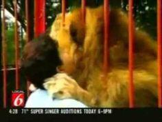 Veja a reação de um Leão adulto reencontrando a senhora que o criou - Incrível - YouTube