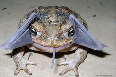 toad bat - Google 検索