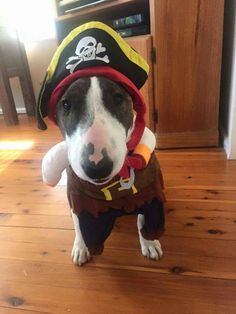 Ahoy there me hearties