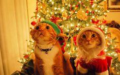 ... christmas-trees-kelowna-christmas-trees-knoxville-tn-christmas-trees